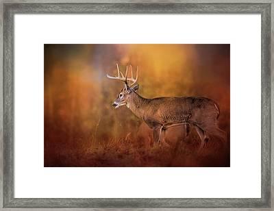 Big Buck In Autumn White Tailed Deer Art Framed Print