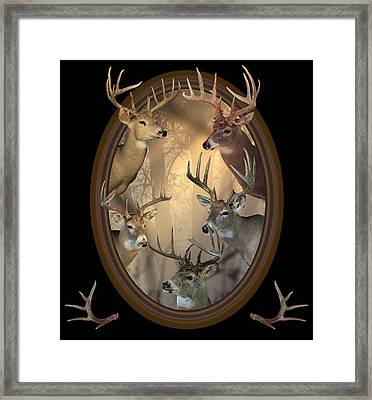Big Bucks Framed Print