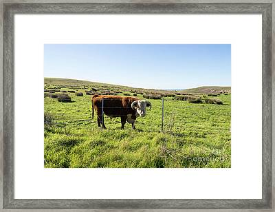 Framed Print featuring the photograph Big Bull At Point Reyes National Seashore California Dsc4884 by Wingsdomain Art and Photography