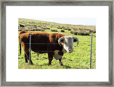 Framed Print featuring the photograph Big Bull At Point Reyes National Seashore California Dsc4885 by Wingsdomain Art and Photography