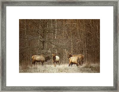 Framed Print featuring the photograph Big Bull Meeting In Boxley Valley by Michael Dougherty