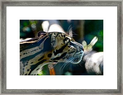 Big Cat Framed Print by Gene Sizemore