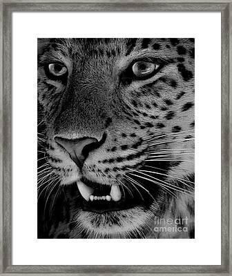 Big Cat II Framed Print by Louise Fahy