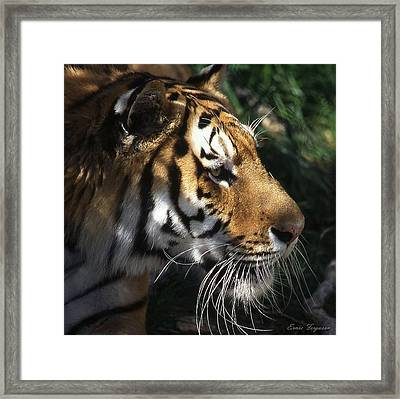 Big Cat No 60 Framed Print by Ernie Ferguson