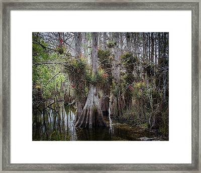 Big Cypress Preserve Framed Print by Bill Martin