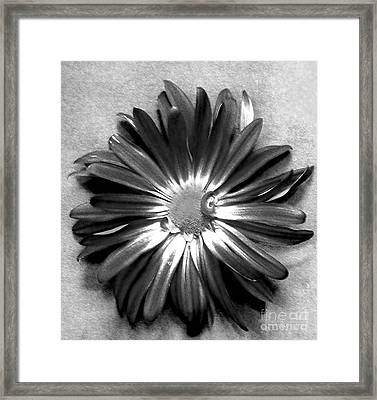Big Daddy Daisy Framed Print by Marsha Heiken