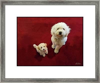 Big Dog, Little Dog Framed Print