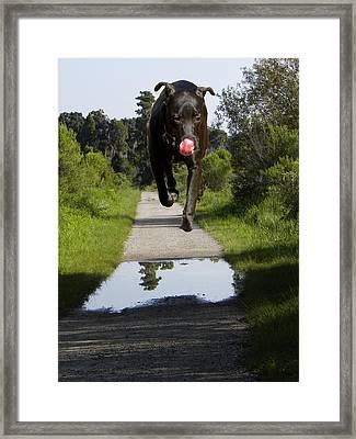 Big Dog On Heron Hideout Trail Framed Print
