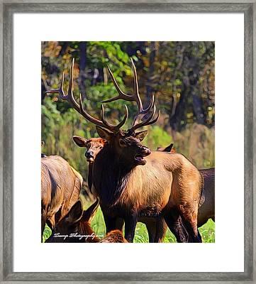 Big Elk Framed Print