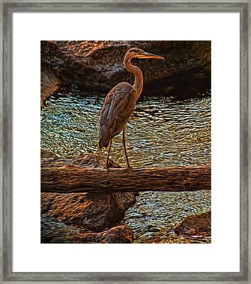 Big Falls Blue Heron Framed Print by Trey Foerster