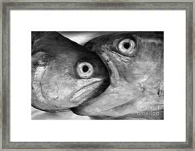 Big Fish Eat Small Fish Framed Print by Michal Boubin