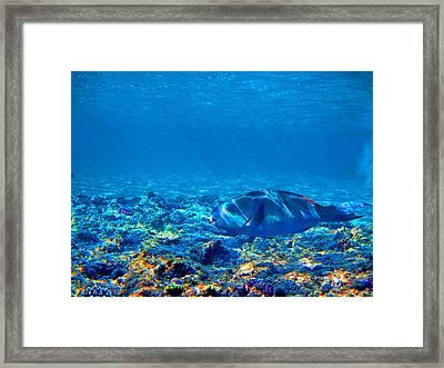 Big Fish. Underwater World. Framed Print by Andy Za