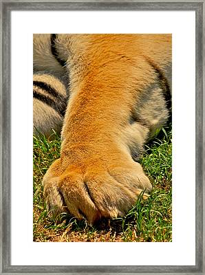 Big Foot Framed Print