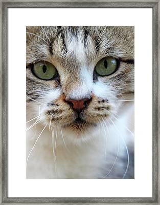 Framed Print featuring the photograph Big Green Eyes by Munir Alawi