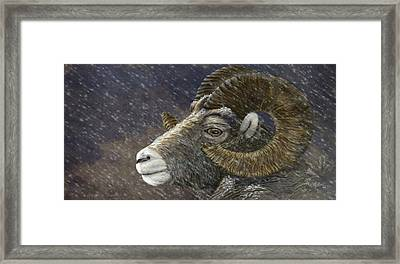 Big Horn In Snowstorm Framed Print