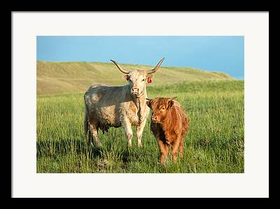 Cattle Ranch Framed Prints