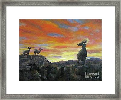 Big Horn Sheep At Sunset Framed Print