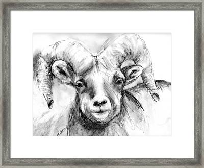 Big Horn Sheep Framed Print by Marilyn Barton