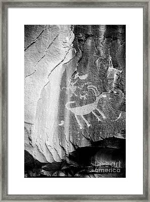Big Horn Sheep Petroglyph 2 - Nine Mile Canyon - Utah Framed Print by Gary Whitton