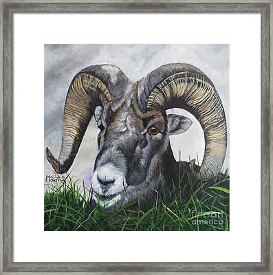 Big Horned Sheep Framed Print