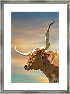 Big Horns Framed Print by Robert Anschutz
