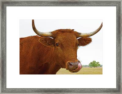 Big Lick Framed Print