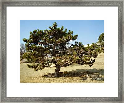 Big Man On Campus Framed Print by Iris M Gross