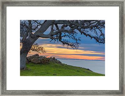 Big Oak Above Fog Framed Print