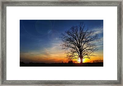 Big Oak Splendor Framed Print by Brook Burling