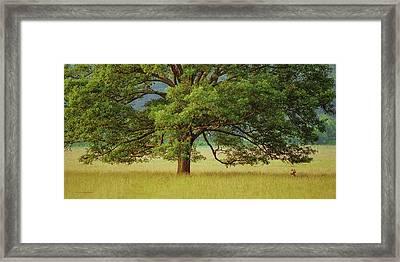 Big Oak Framed Print