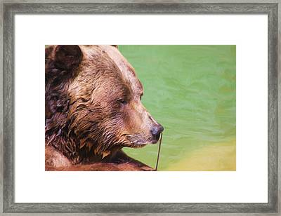 Big Old Bear With A Tiny Stick Framed Print by Karol Livote