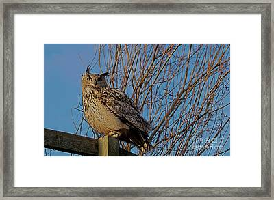 Big Owl II Framed Print