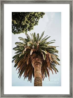 Big Palm Tree Framed Print by Viktor Pravdica
