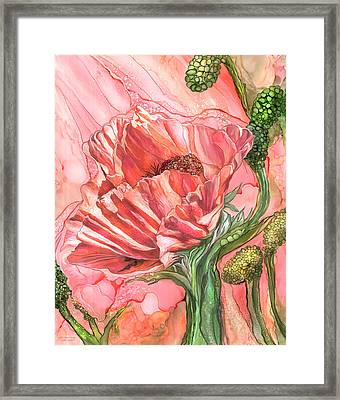 Big Peach Poppy Framed Print by Carol Cavalaris