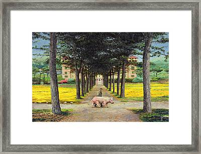 Big Pig - Pistoia -tuscany Framed Print by Trevor Neal