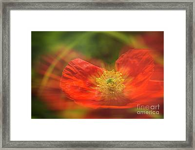 Big Poppy Framed Print