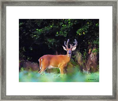 Big Rack Framed Print