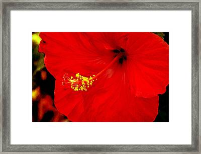 Big Red Caribbean Hibiscus Framed Print by Leonard Rosenfield