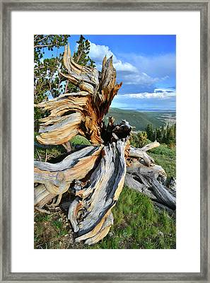 Big Roots Framed Print by Ray Mathis