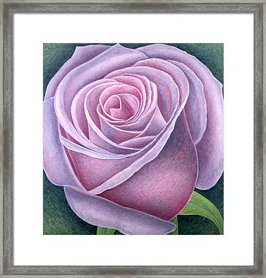 Big Rose Framed Print by Ruth Addinall