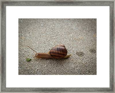 Framed Print featuring the photograph Big Salad by Alison Frank