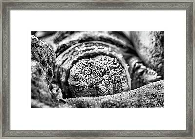 Big Sexy Black And White Framed Print