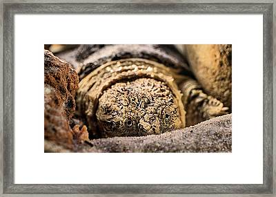 Big Sexy The Snapping Turtle Framed Print