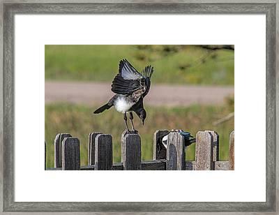 Big Stretch Framed Print by Alana Thrower