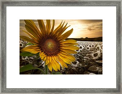 Big Sun Framed Print by Debra and Dave Vanderlaan