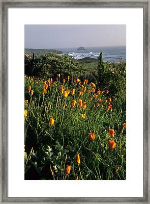 Big Sur Poppies Framed Print by Eric Foltz