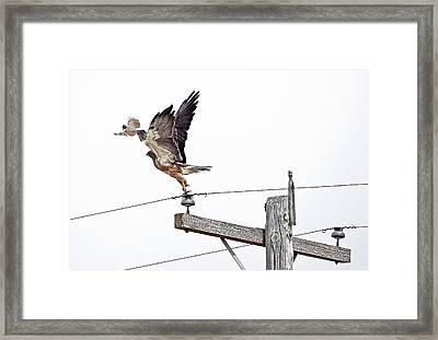 Big Surprise In A Little Package Framed Print by James Steele