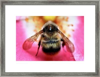 Big Time Bee Close Up Framed Print by Terry Elniski
