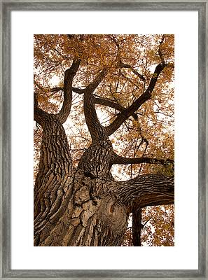 Big Tree Framed Print by James BO  Insogna