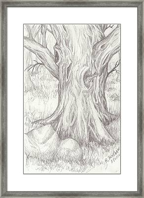 Big Tree Framed Print by Ruth Renshaw